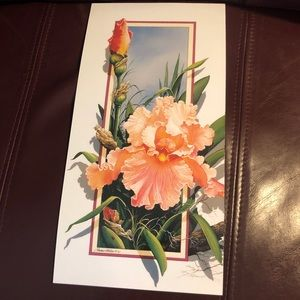 "Other - Peach iris lithograph art print🆕 6""x12"""